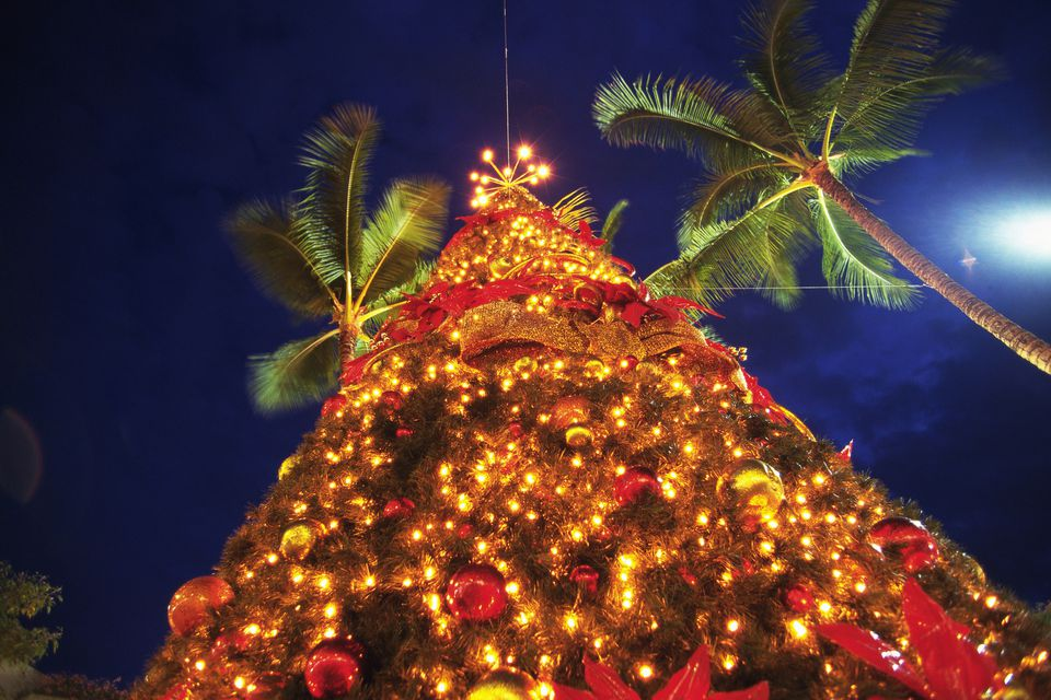 an Illuminated Christmas Tree Surrounded By a Couple of Palms, Long Exposure, Low Angle View, Hawaii, USA