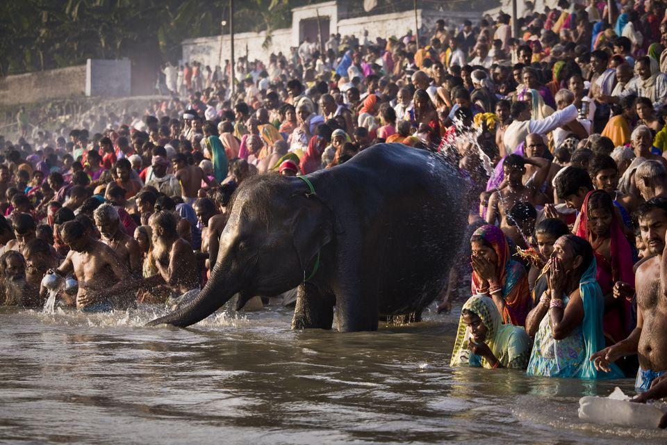 Sonepur Fair, Bihar.