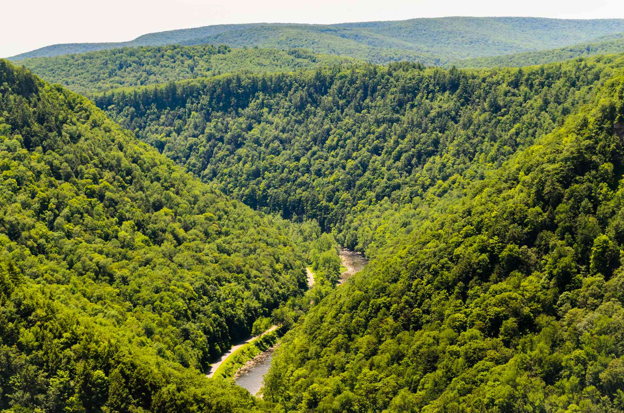 the tree-covered Pine Creek Gorge