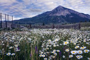 Crested Butte mountain covered in flowers