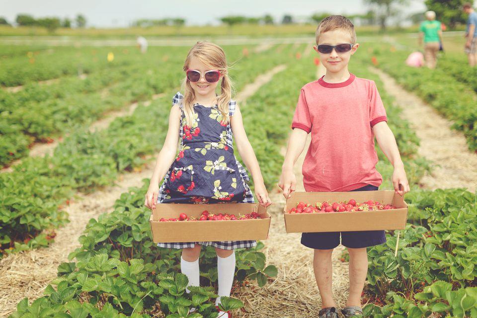 Hermano y hermana recogiendo fresas