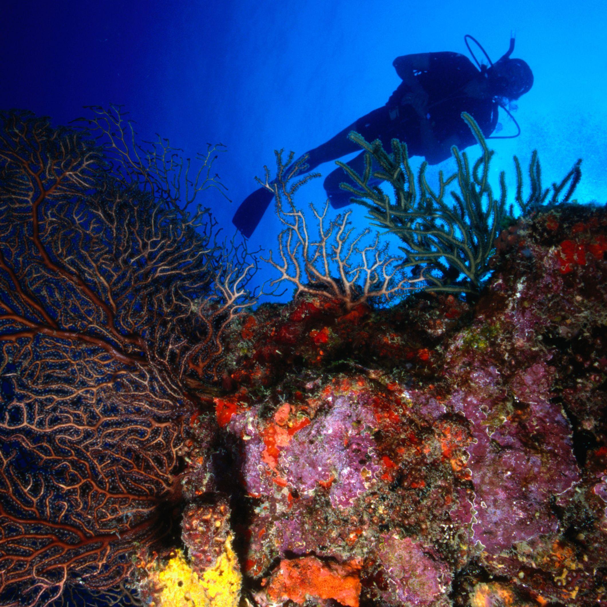 Diver at Creole Canyon