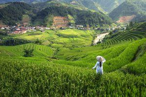 Vietnamese girl in Ao Dai, in rice terrace of Sapa in Vietnam.