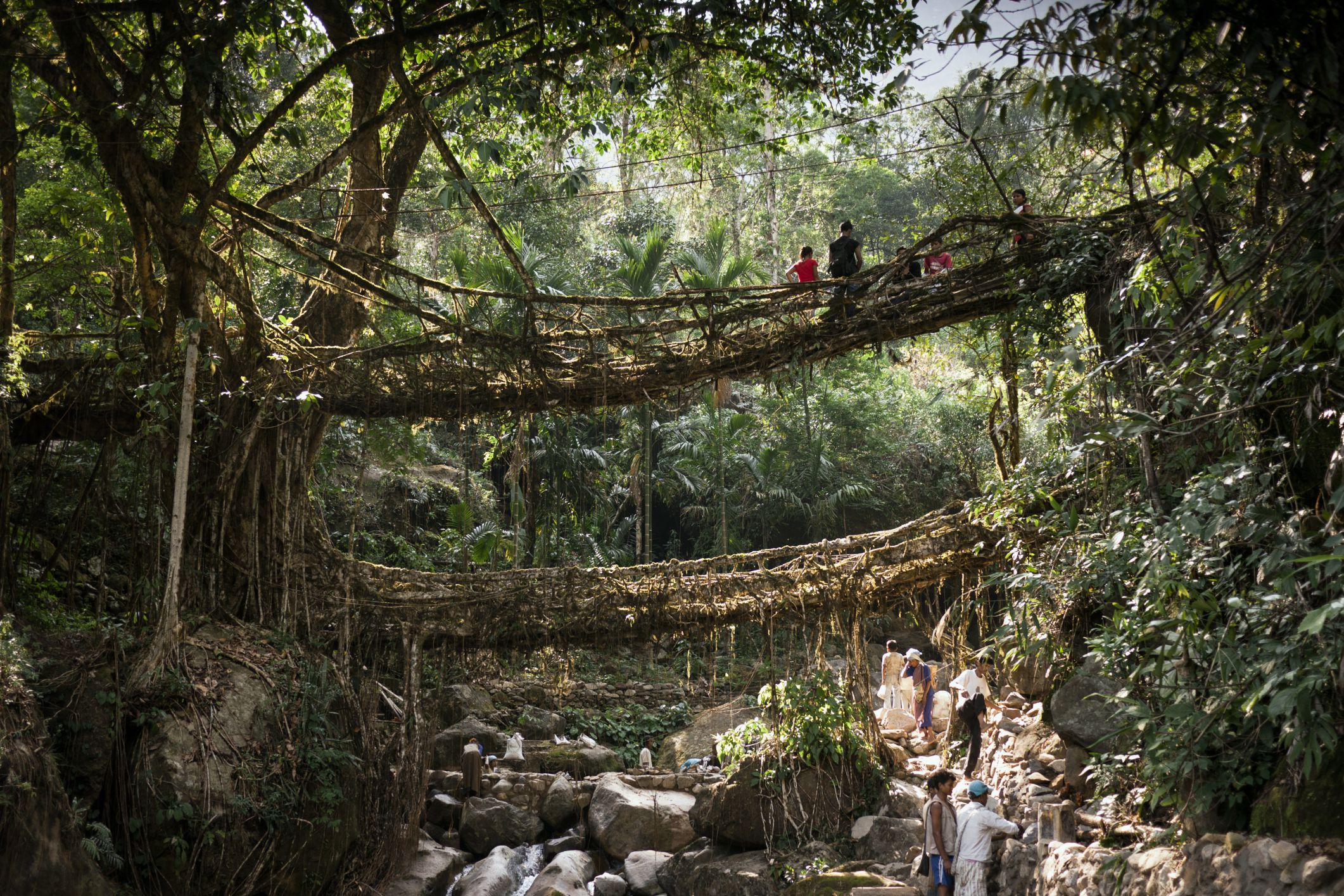 Cherrapunji Double Decker Root Bridge