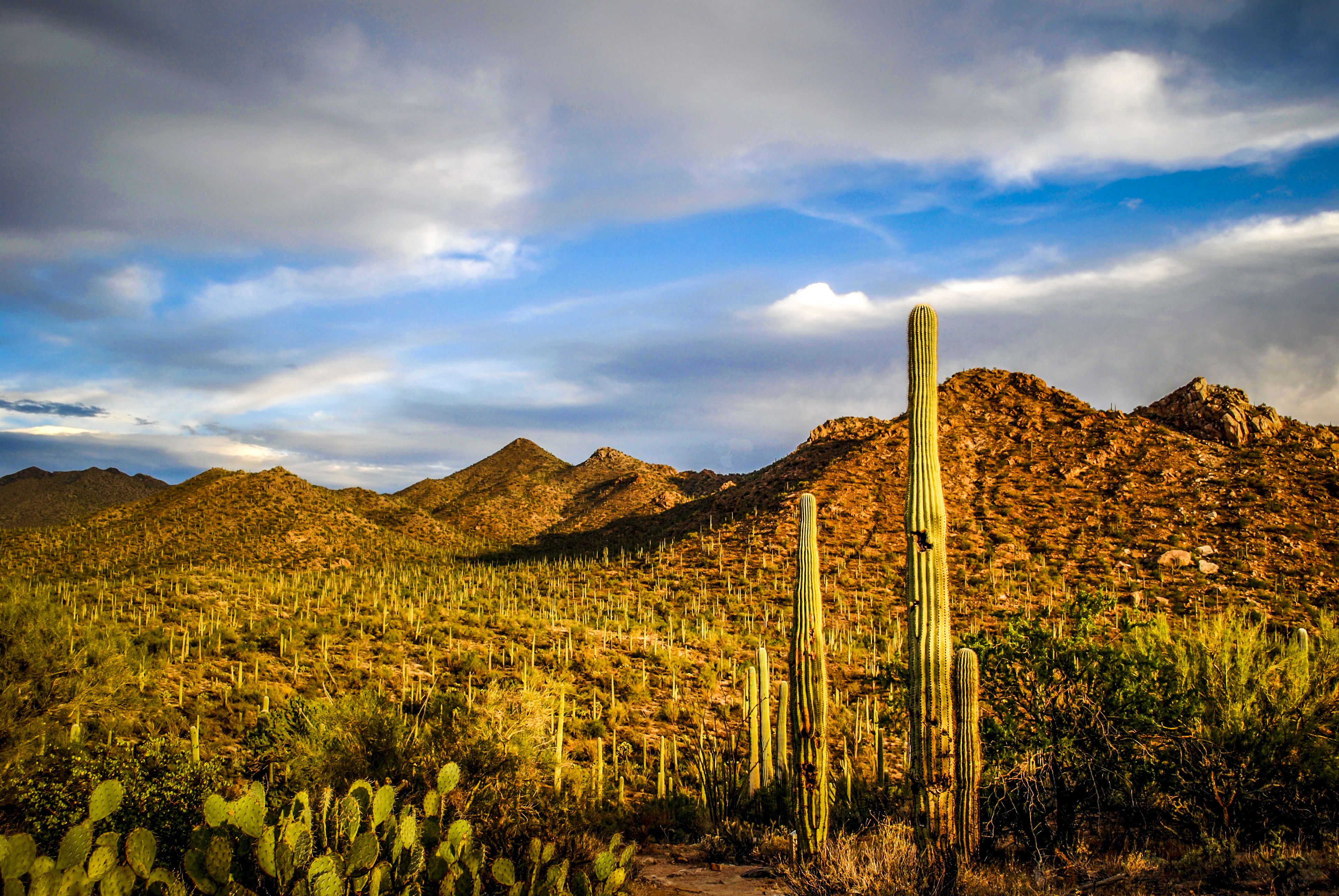 Cheap Auto Insurance >> Free Activities to Do in Tucson, Arizona