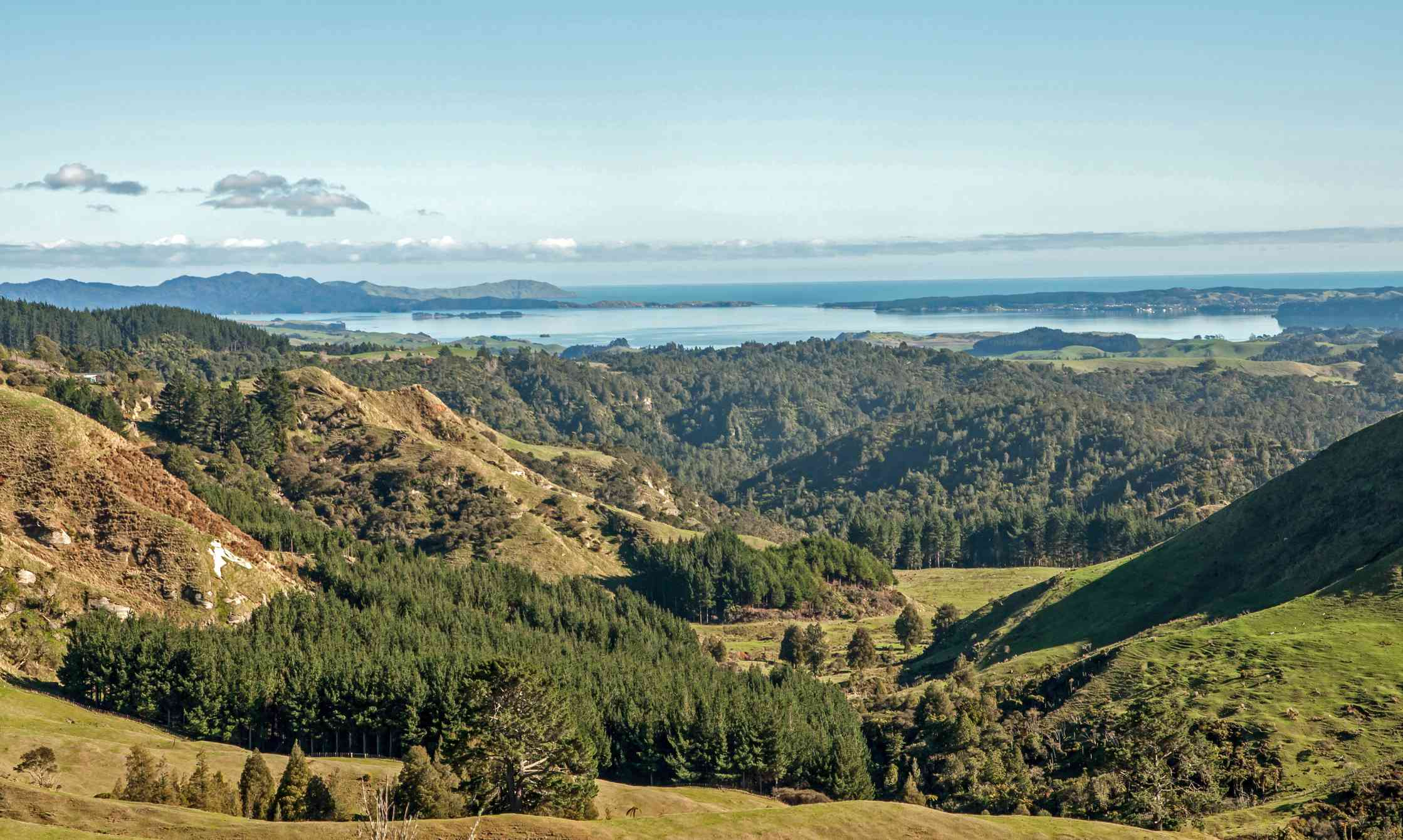 View of New Zealand landscape with evergreen trees and hills
