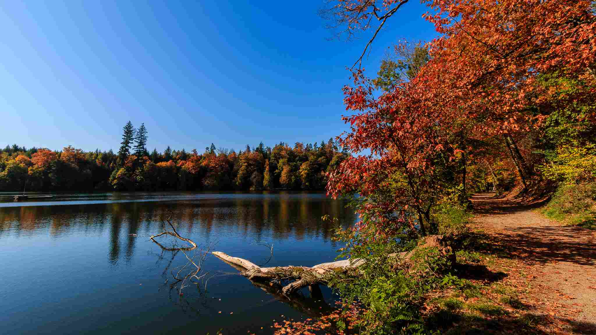 The Black Forest Germany >> Top 6 Places to See Autumn Leaves in Germany