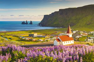 Vik i Myrdal, Southern Iceland. Fields of lupins in bloom and the town church.