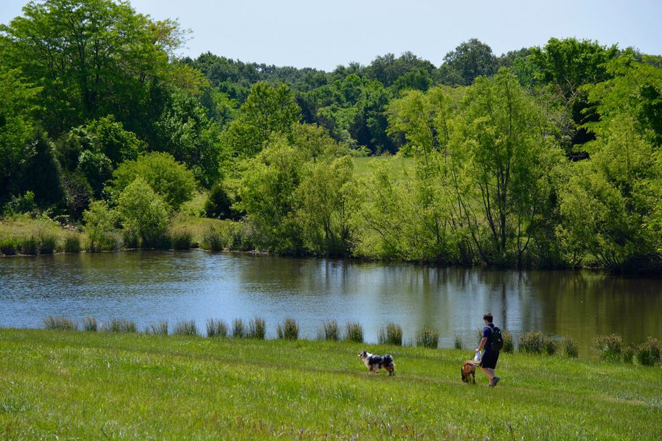 Shelby Farms Park Dog Park