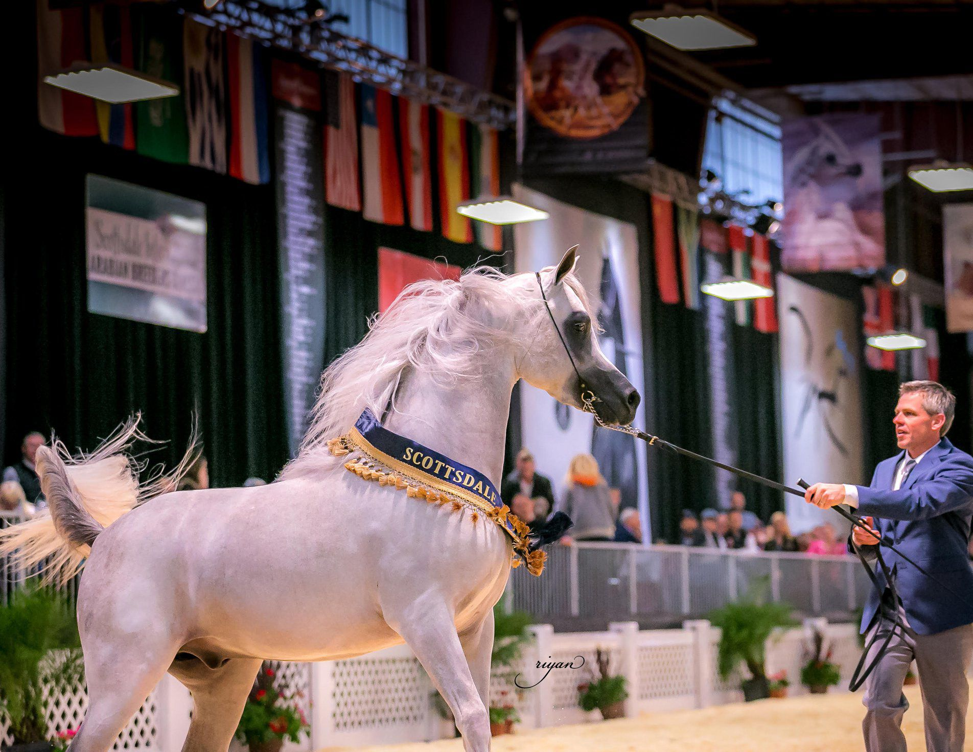 2020 Scottsdale Arabian Horse Show At Westworld