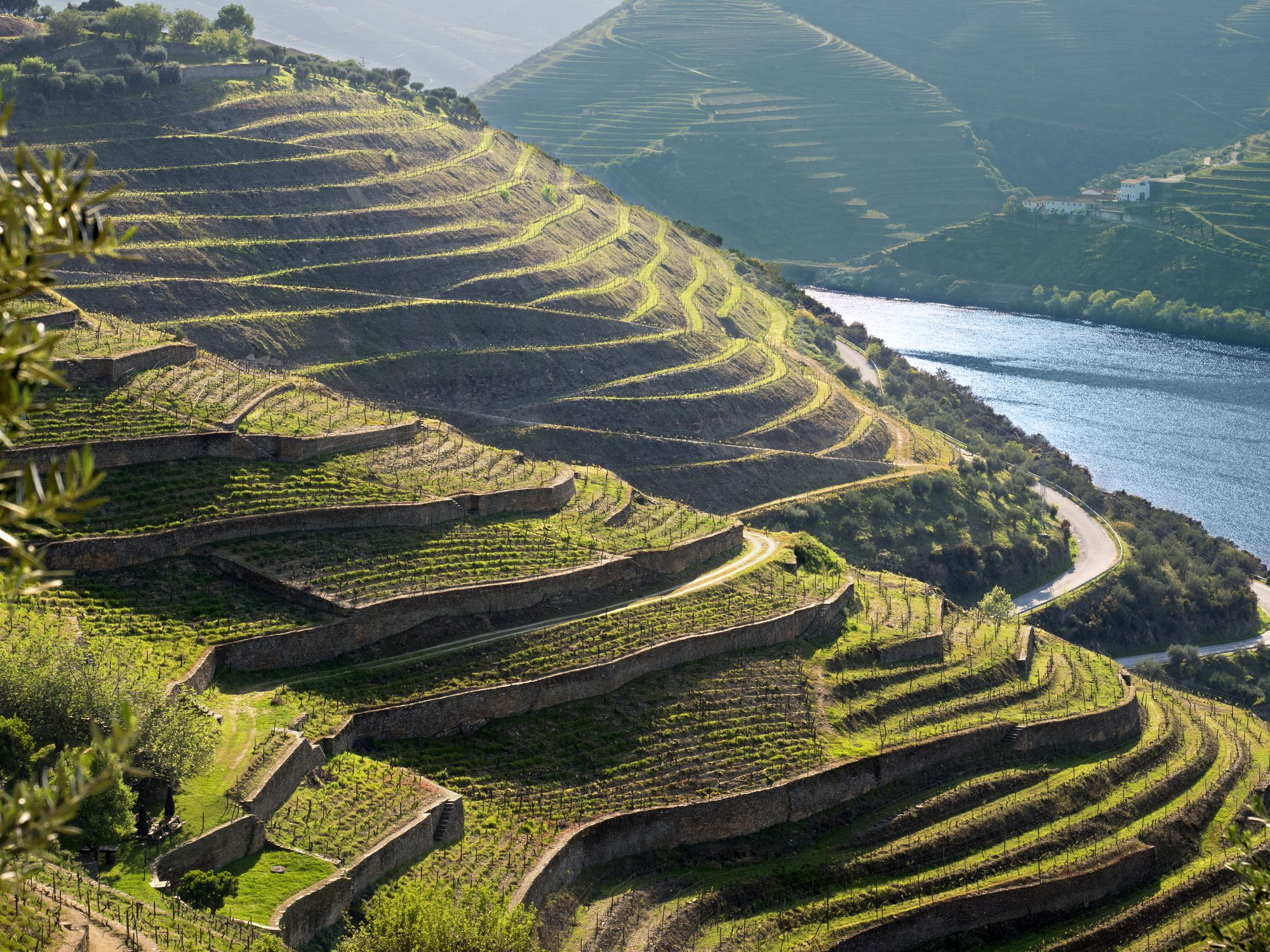 Wine country by the Douro River of Portugal