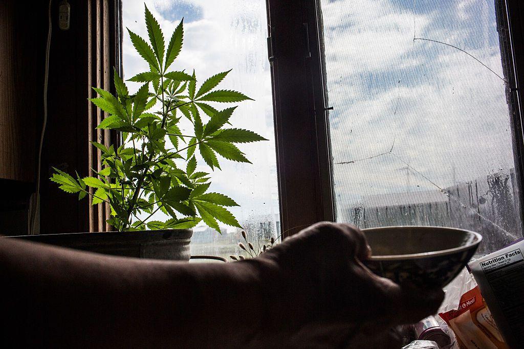 Как вырастить марихуану дома на подоконнике онлайн игра марихуана