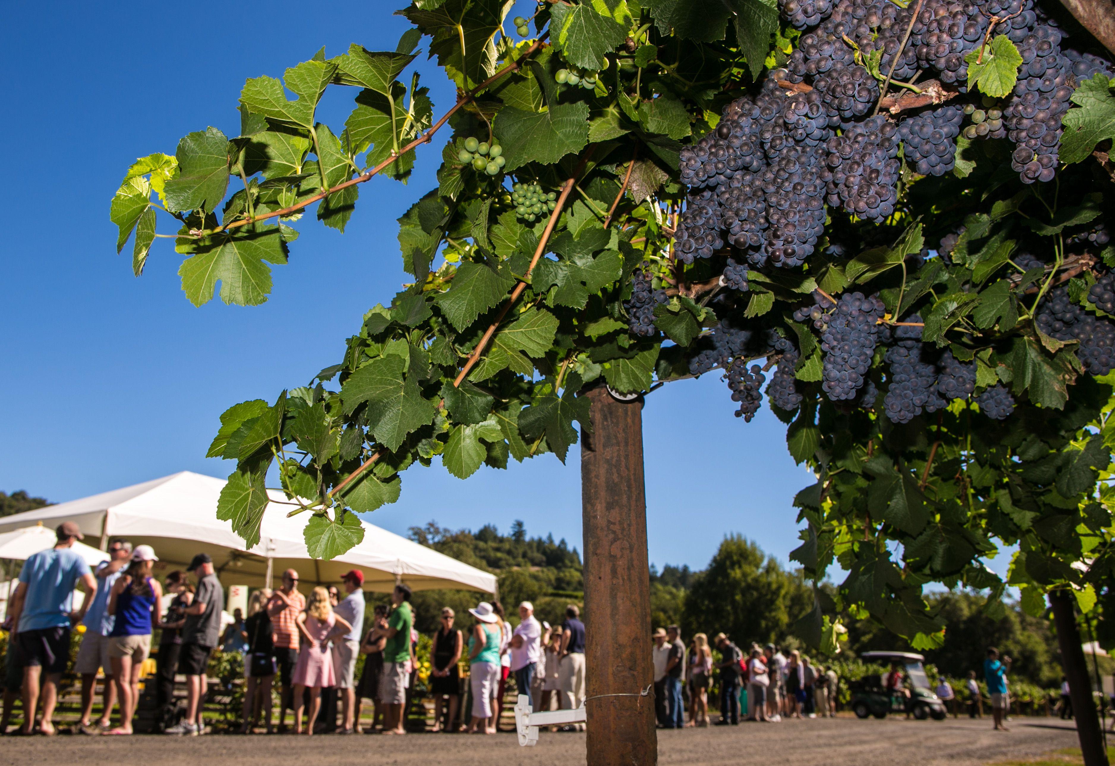 Wine Events Hightlight California's Grape Harvest