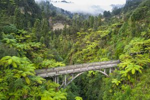 bridge over a narrow canyon surrounded by forest and palm trees