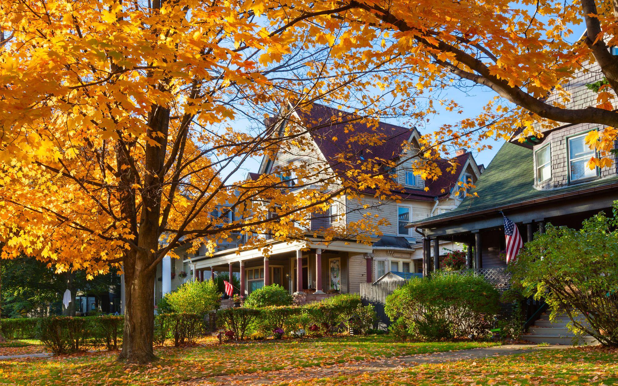 Elmwood Village Autumn