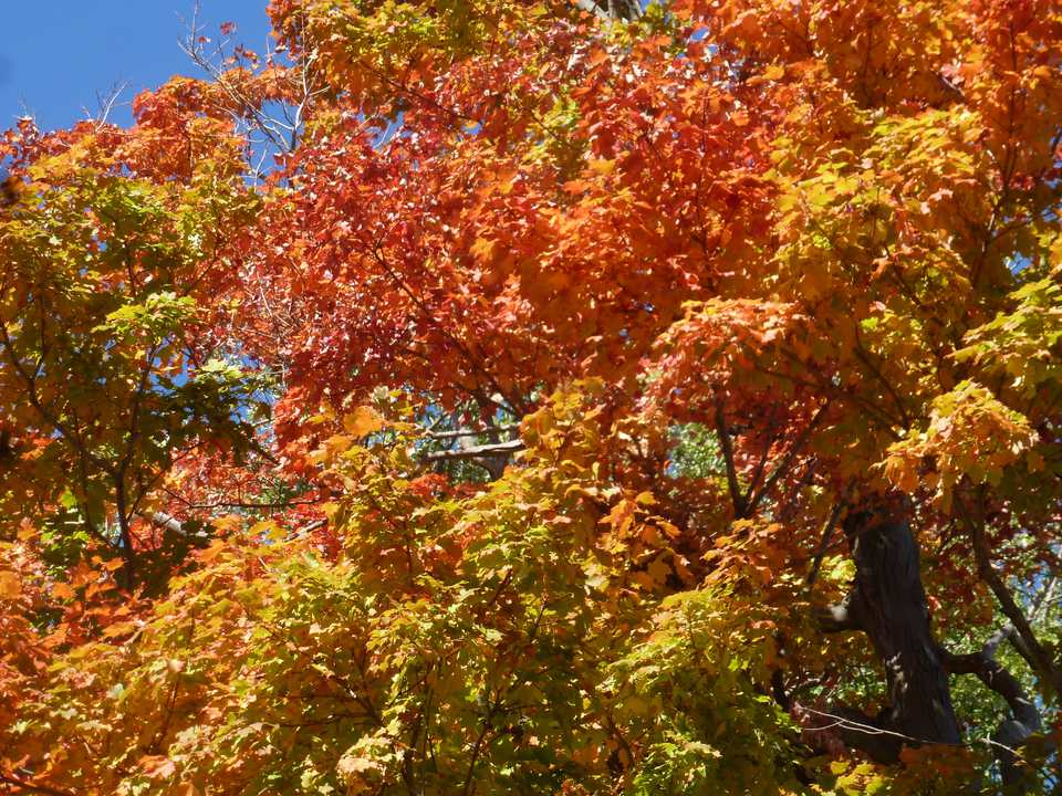 Autumn Leaves on Long Island, NY
