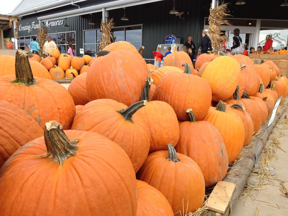 Pumpkins at Eckert's Orchards