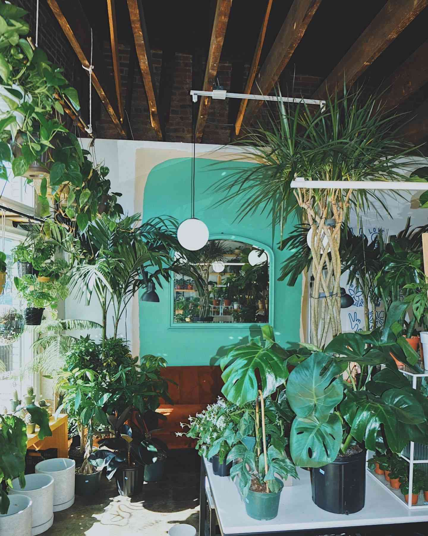 Room filled with various potted plants
