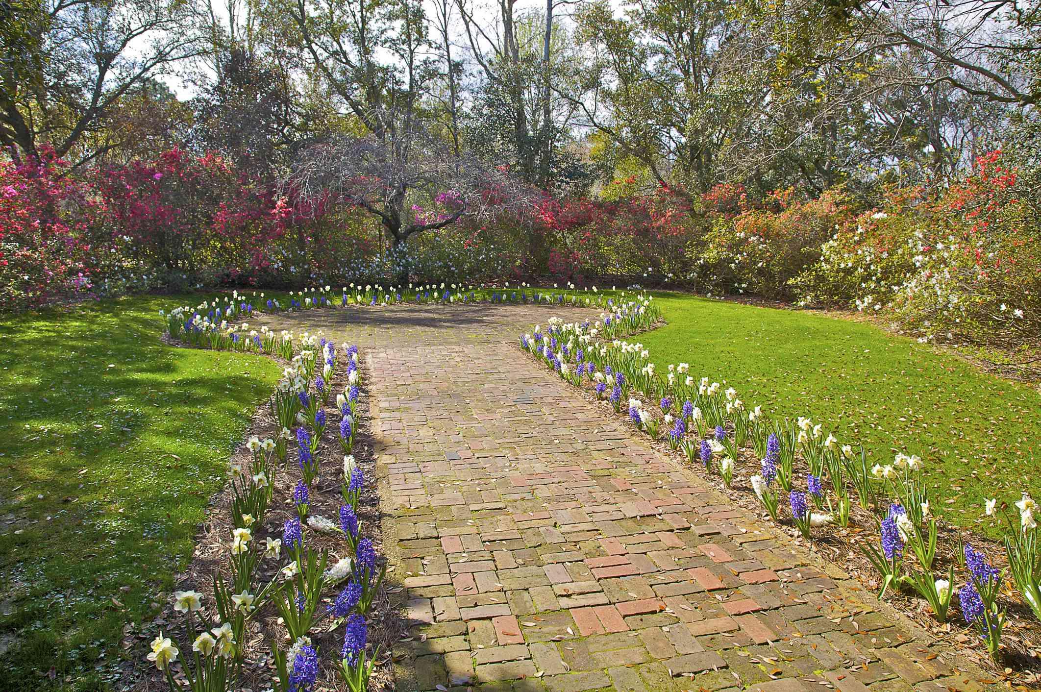 Brick path with hyacinths and azaleas in Mobile, Alabama