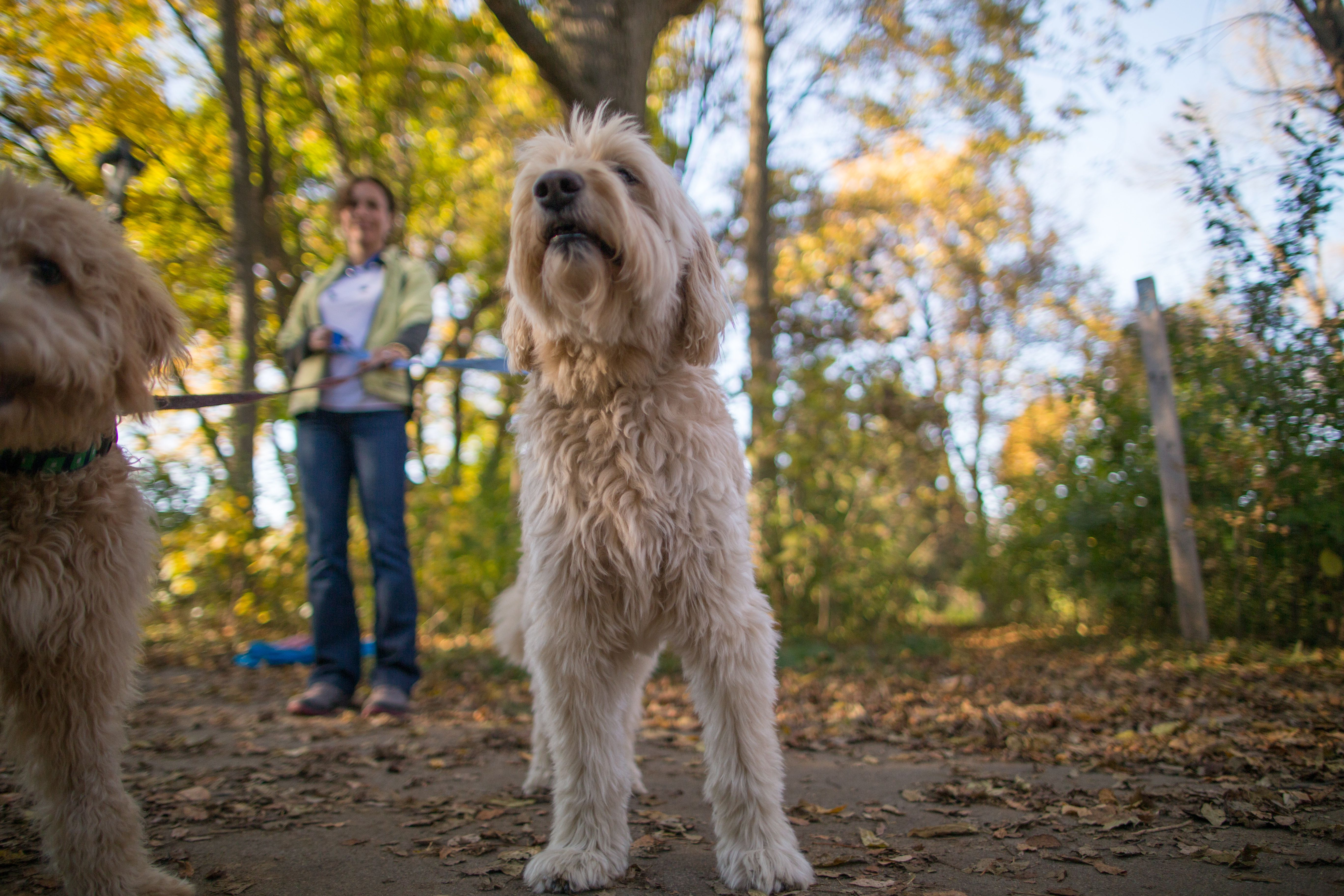 8 Great Spots to Take Your Dog in Milwaukee