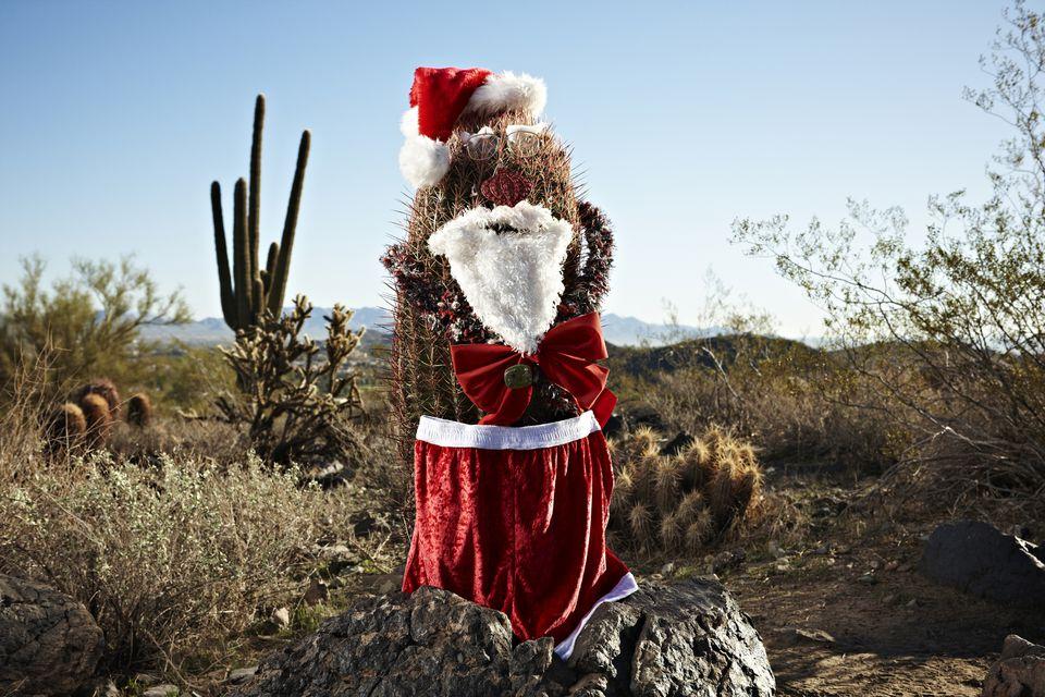 Cactus decorated as santa claus