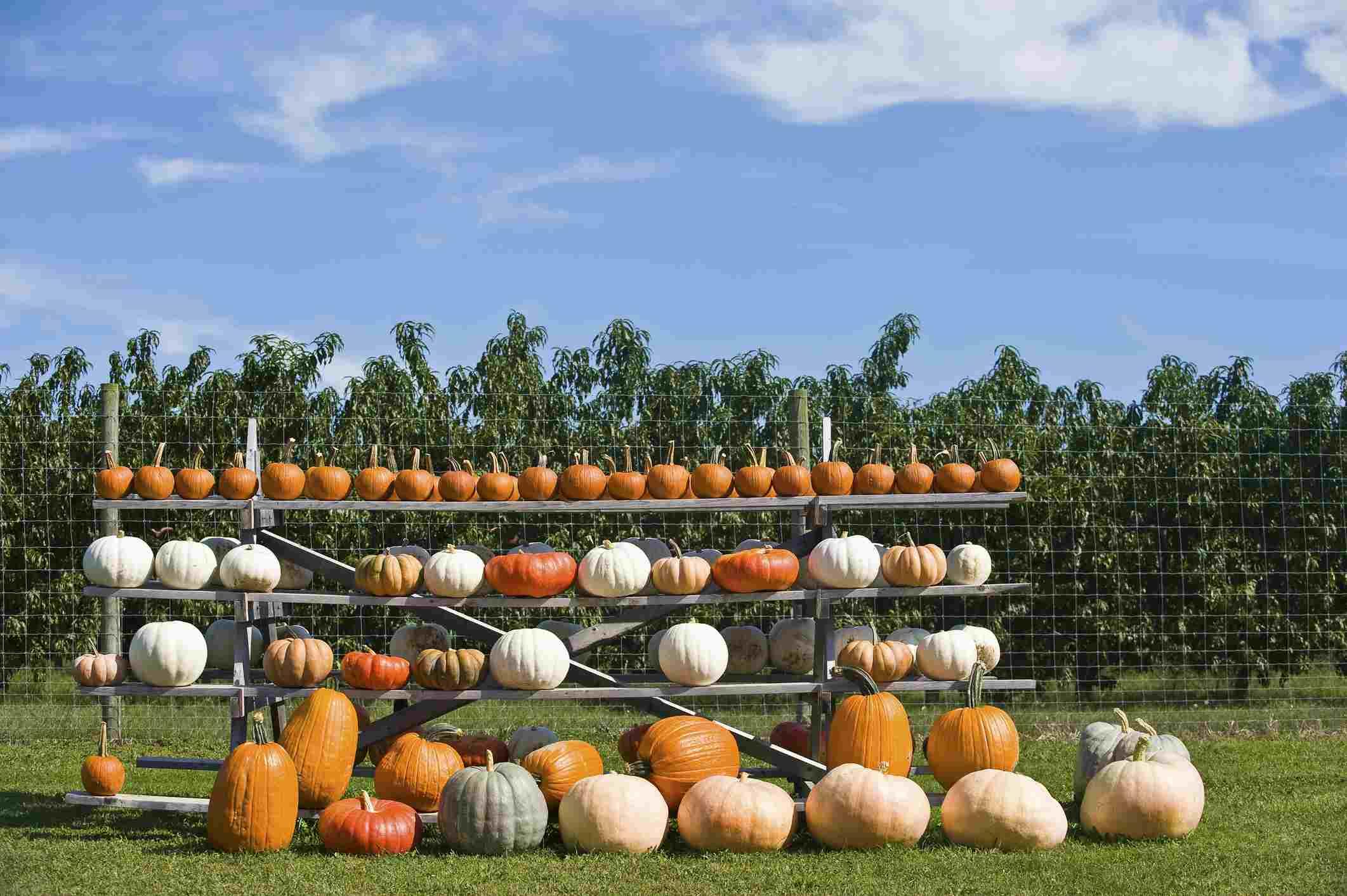 USA, New York State, East Hamptons, Assortment of Pumpkins