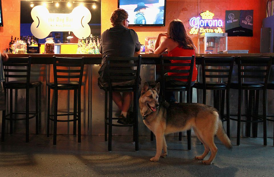 Dog-friendly bar