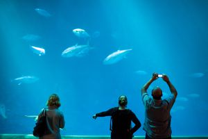 A scene from inside the Monterey Bay Aquarium.