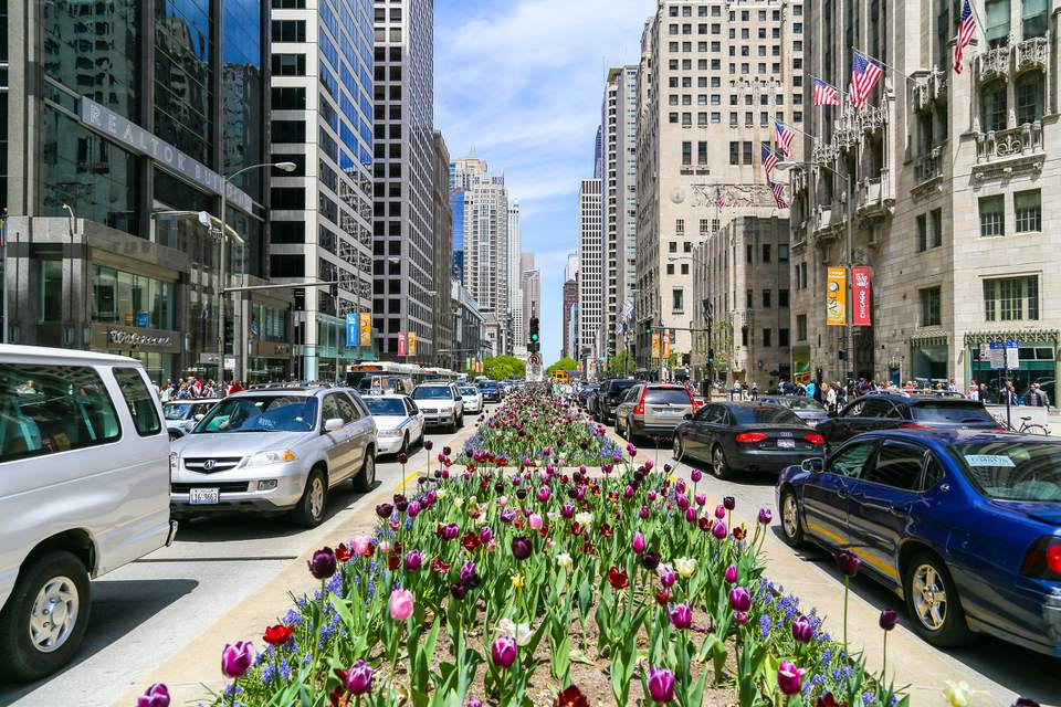 The Magnificent Mile with lots of tulips planted in the median and cars passing by.