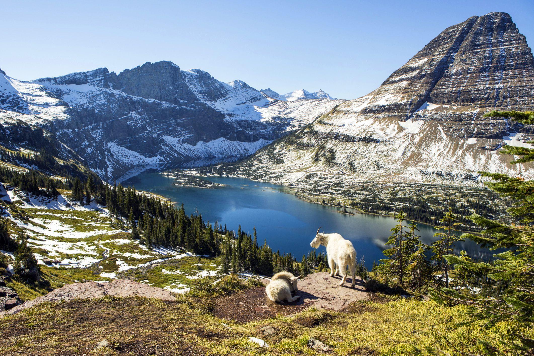 Scenery and Wildlife in Glacier National Park
