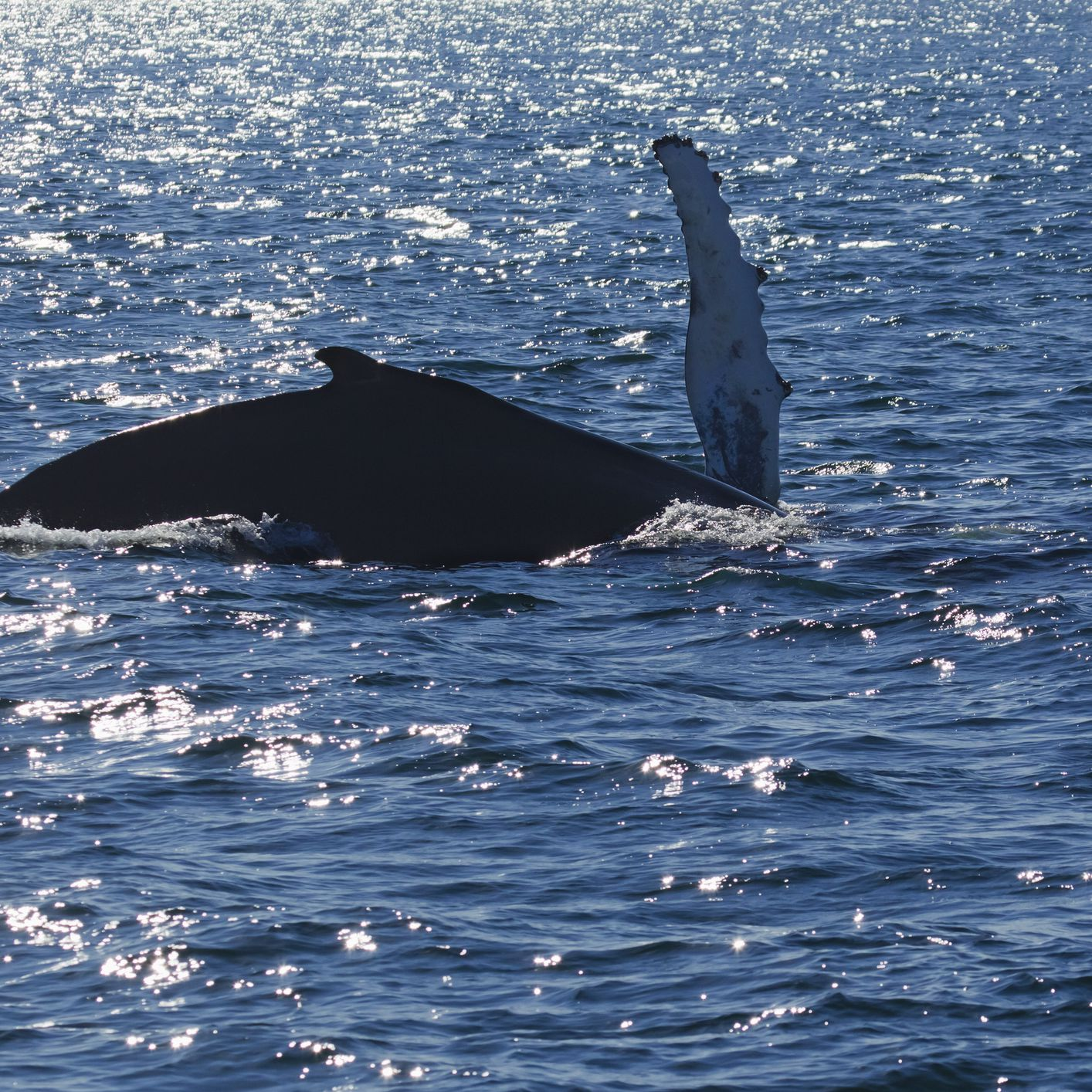 Whale Watching in Maine: The Complete Guide