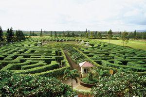 The Dole Plantation Garden Maze