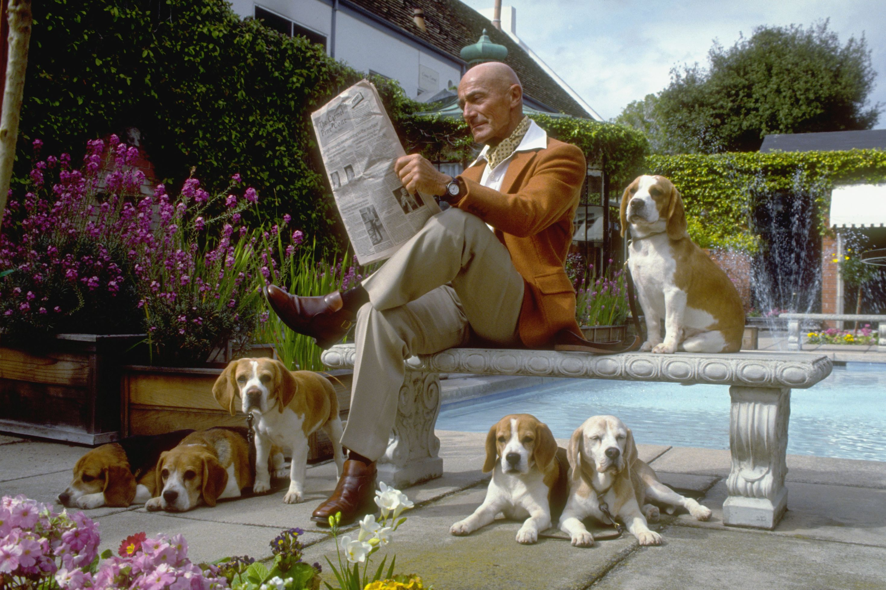 Dog Owner With Beagles