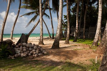 Pile of coconuts and palm trees on beach at Little Corn Island, Nicaragua.