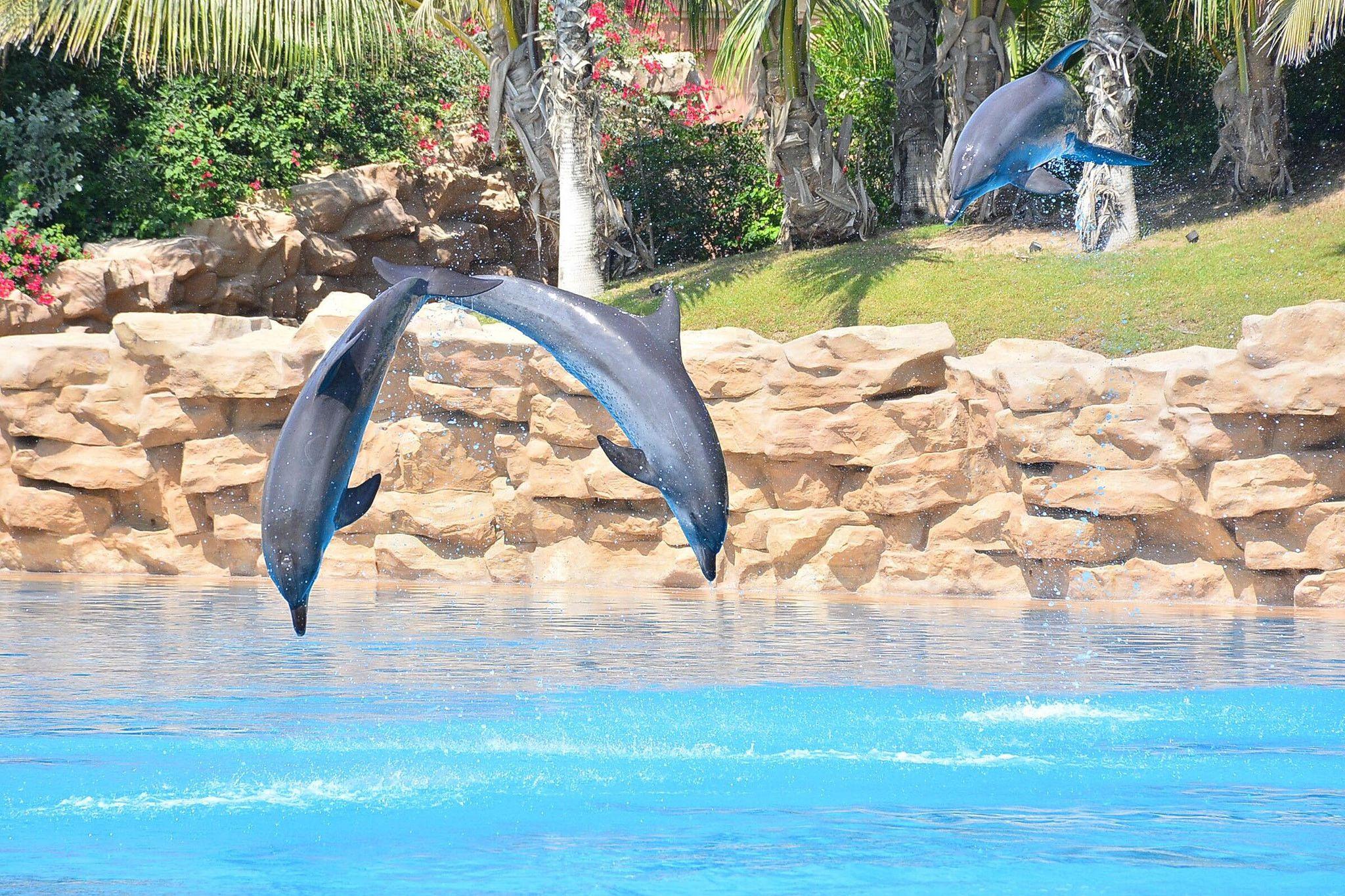 Dolphins jumping through the air