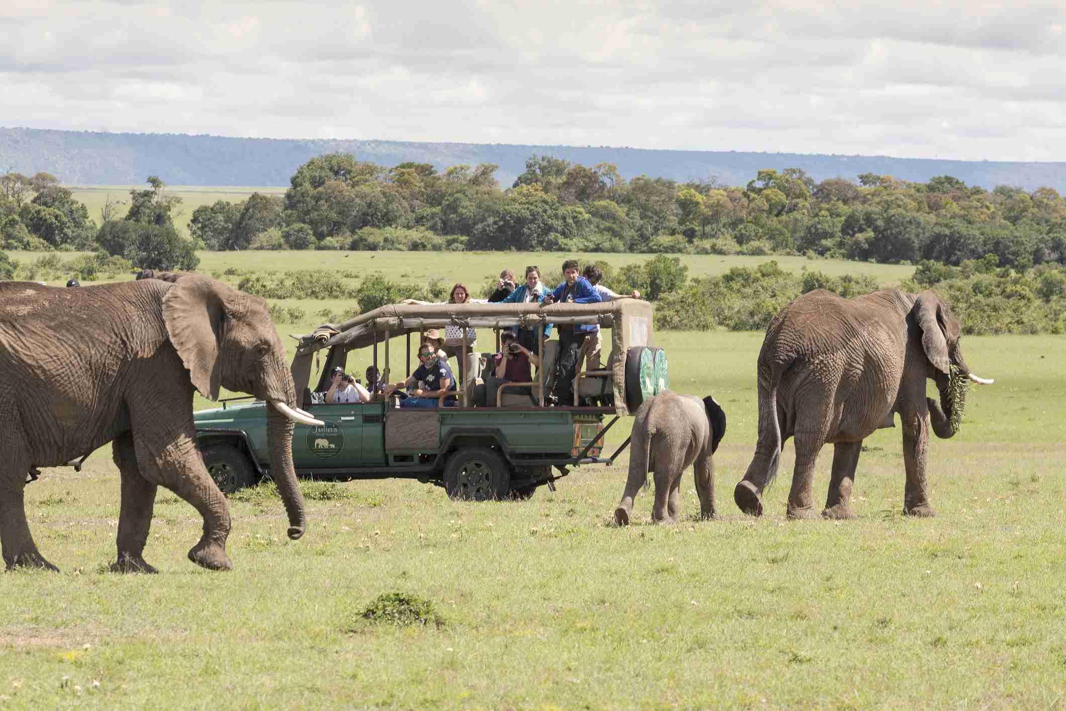 Elephants with young calf and safari tourists in Masai Mara national park