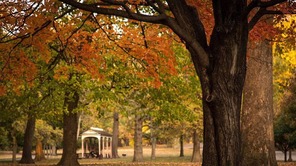 Tower Grove Park in the fall