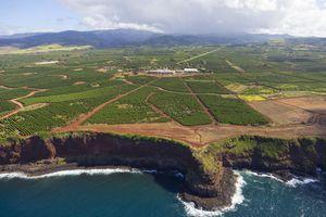 Aerial view of coastal cliffs and a coffee plantation on the island of Kauai, Hawaii
