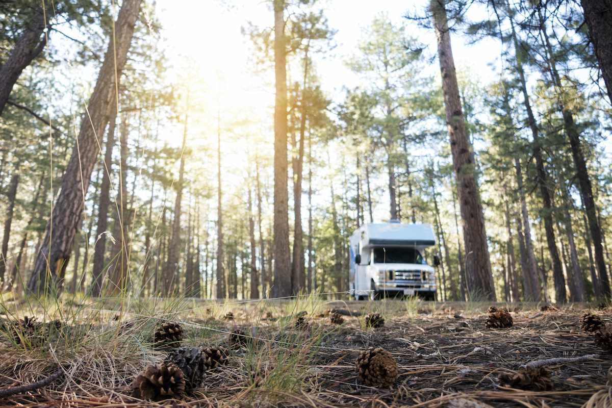 An RV parked amongst trees in a forest