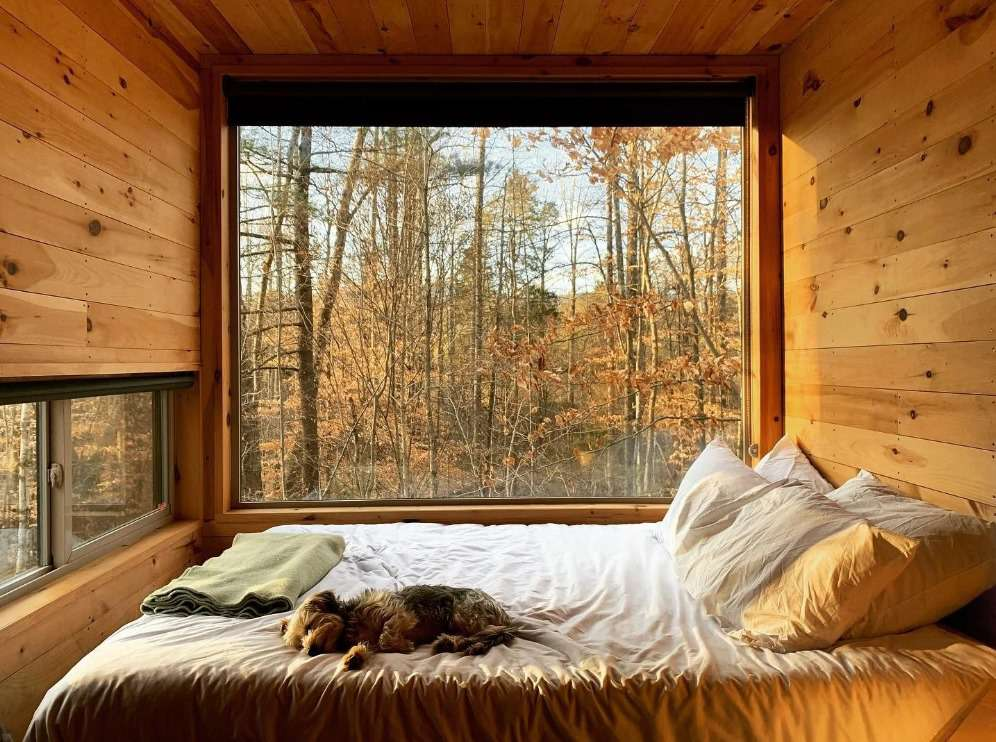 A dog sleeping in a bed in a tiny cabin with a large window with a view of a forest