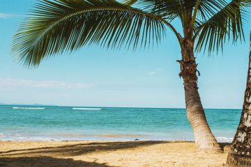An empty beach with clear blue water and a palm tree offering shade in Miches