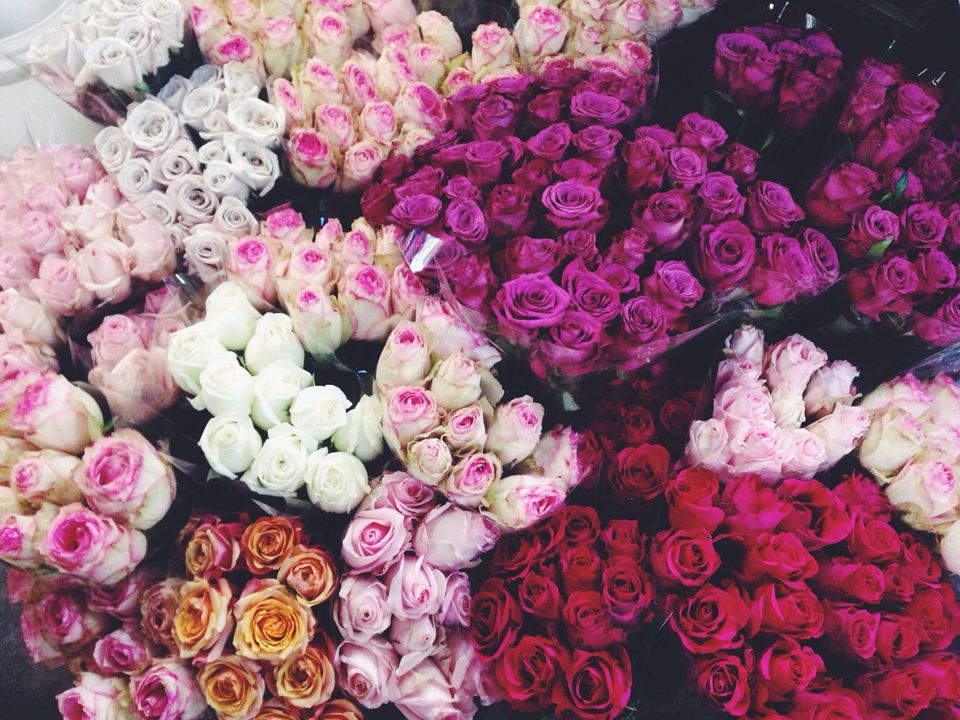 Bunches of different colors of bouquets of roses