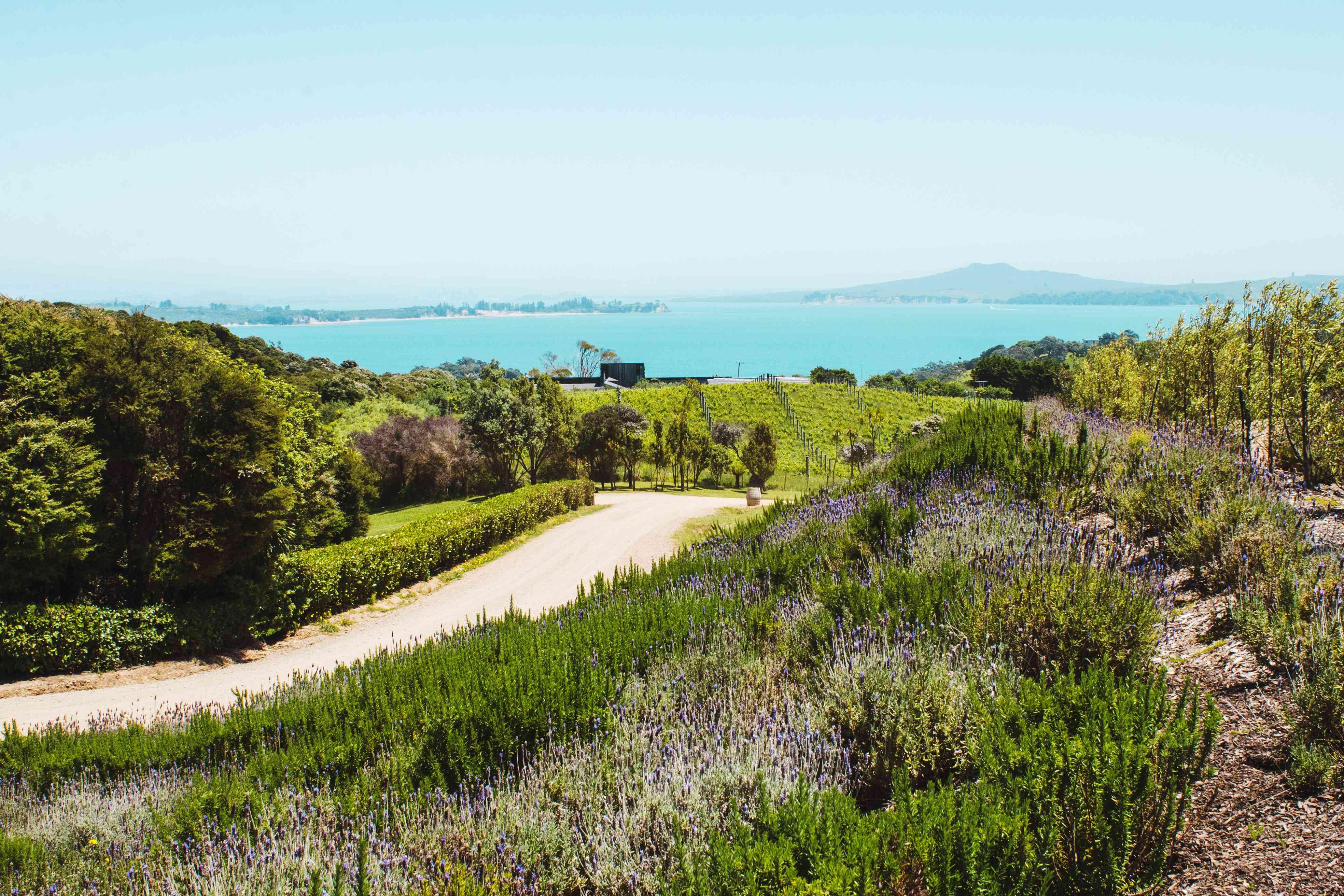 Un camino a través de los viñedos en la isla Waiheke