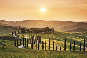 Tuscany landscape with cedar trees