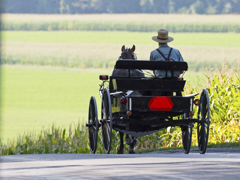 Hombre Amish en una carreta y buggy