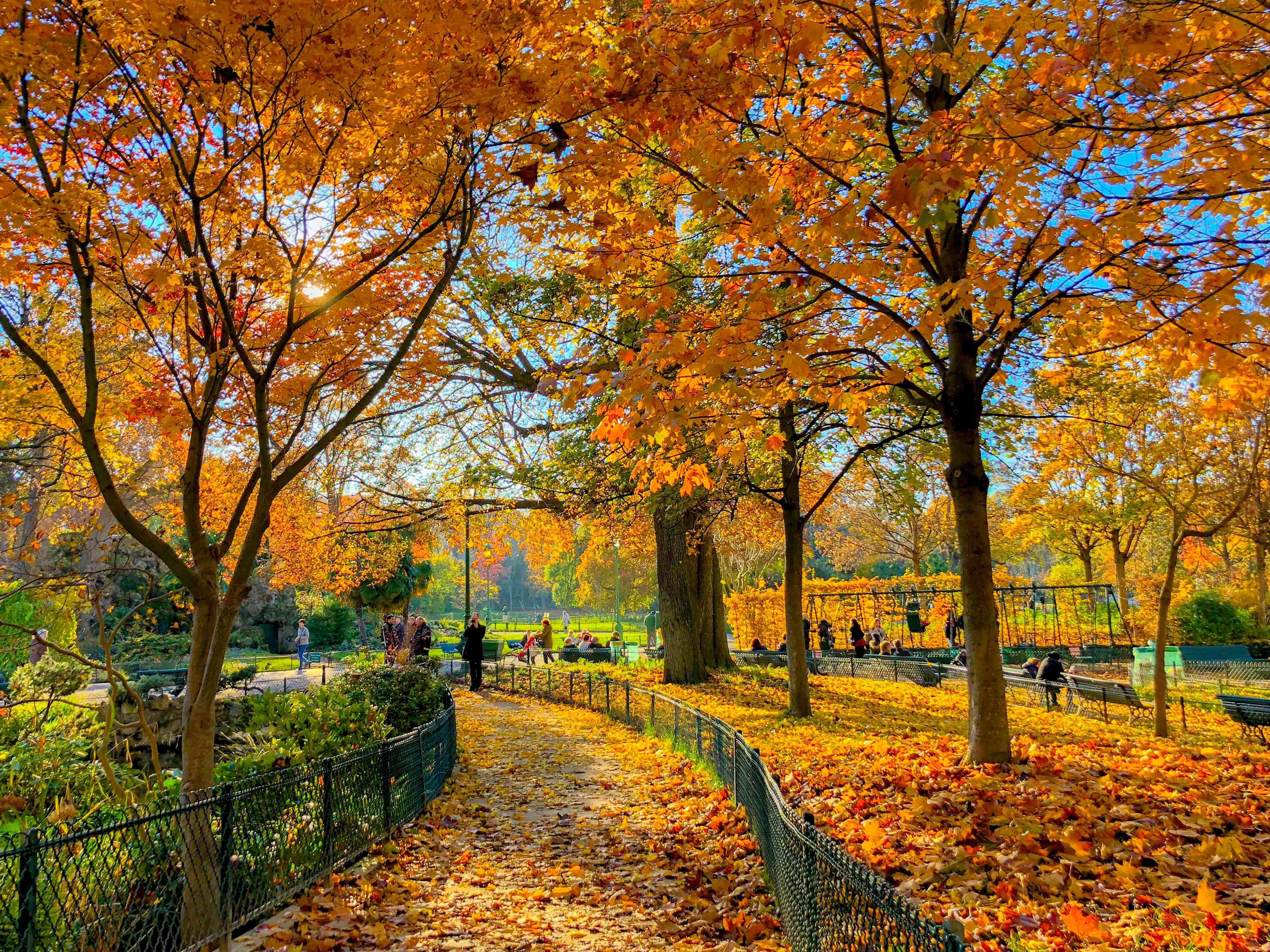 Autumn Trees In Park Monceau