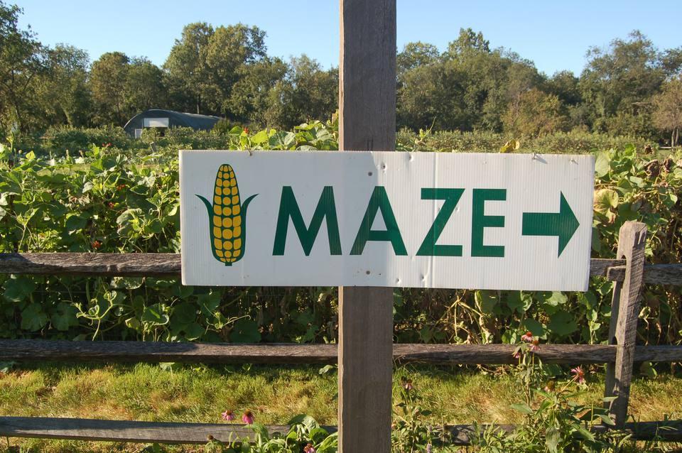 Halloween in Queens - Maize Maze