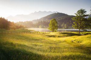 Golden morning light