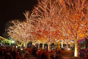 Zoolights at Lincoln Park Zoo
