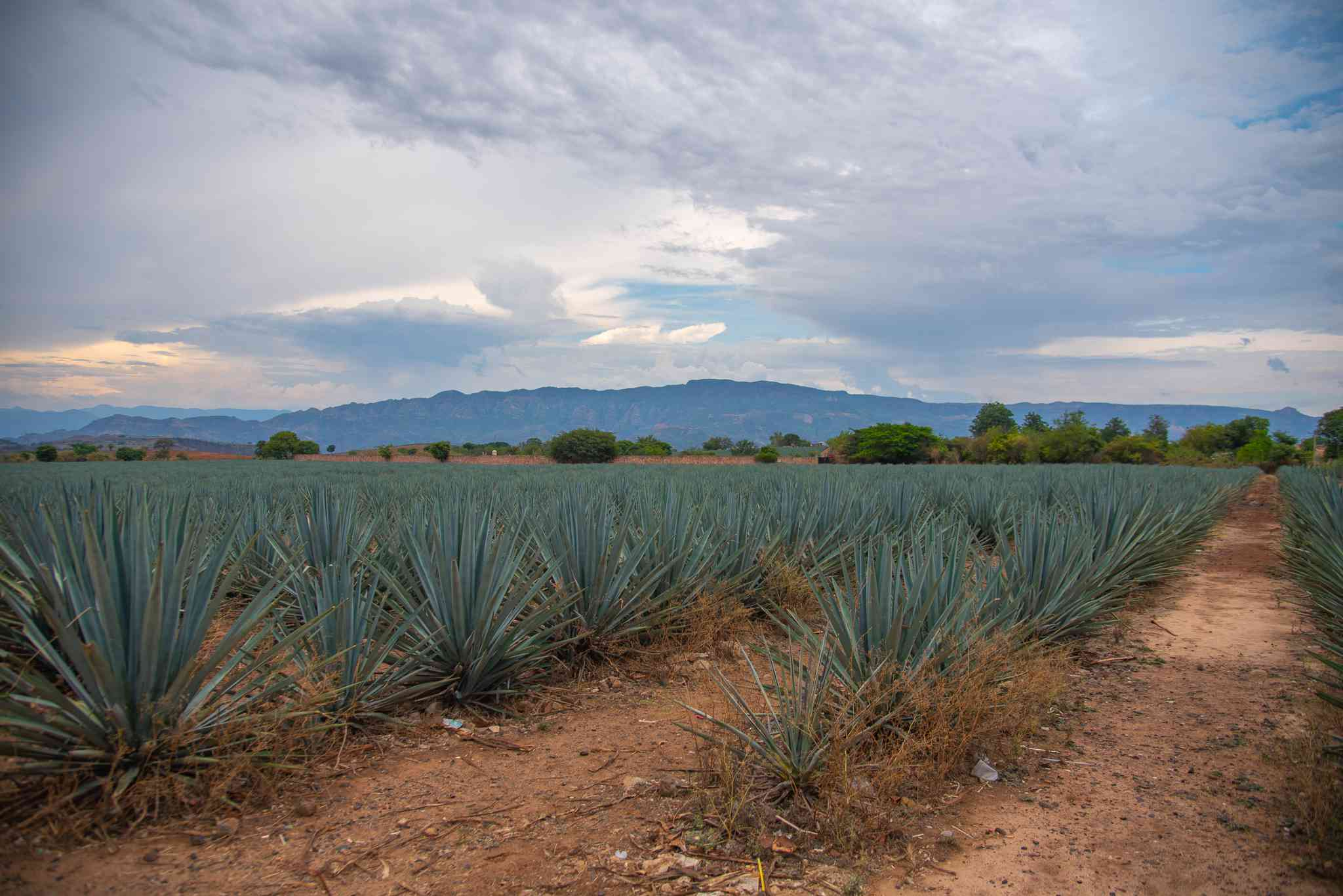 Tequila, Mexico